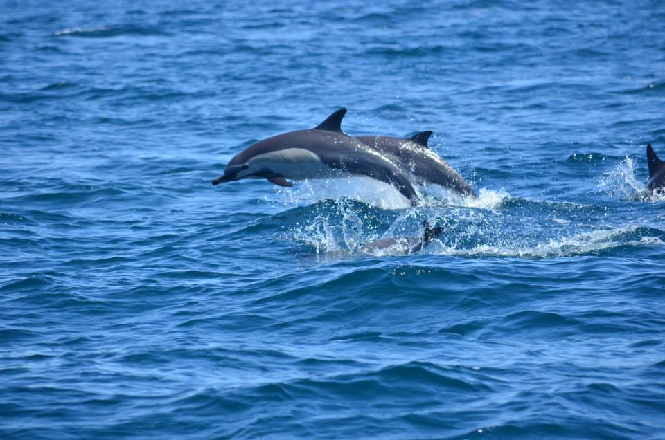 Dolphins Cabo - Baja International Realty - BIRCabo