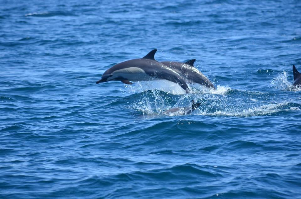Dolphins Cabo - Baja International Realty - BIRCabo