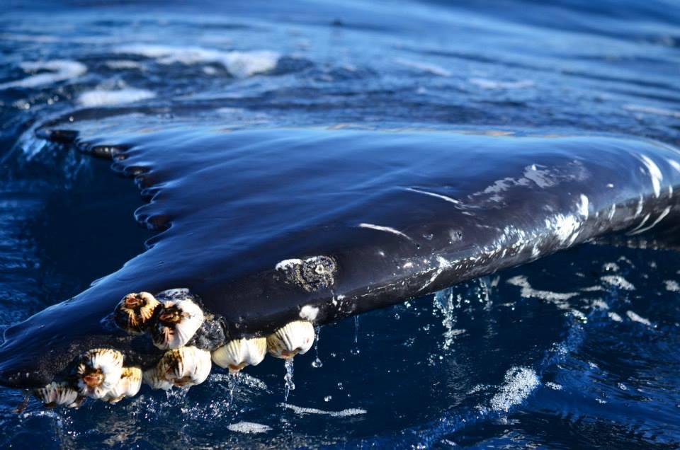 Whale Watching Close Encounter - Baja International Realty - BIRCabo