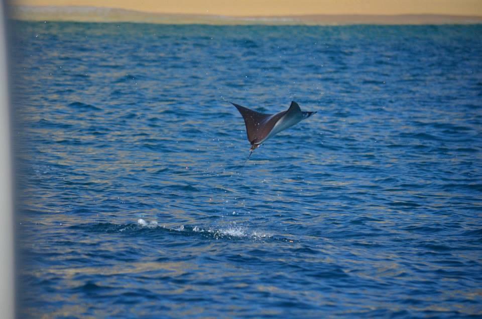 Mobula in Cabo - Baja International Realty - BIRCabo