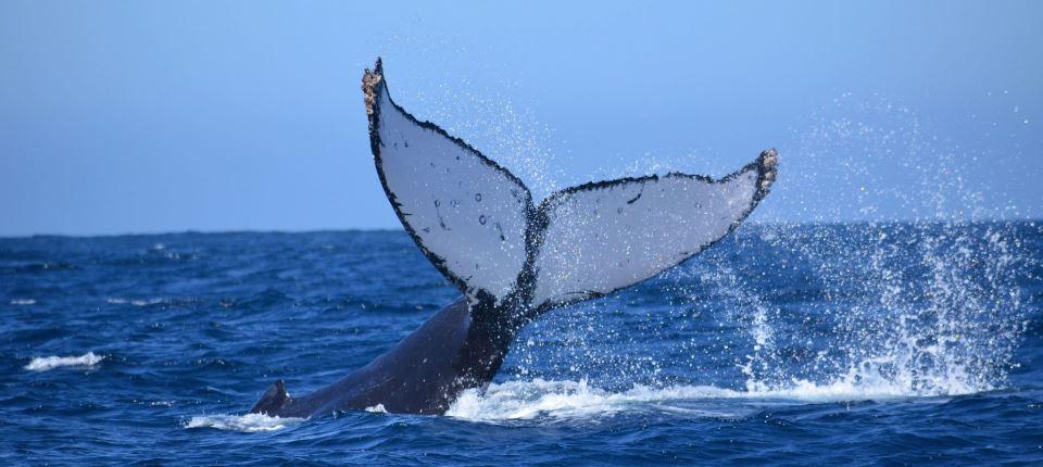 Whale Tail Slap - Baja International Realty - BIRCabo